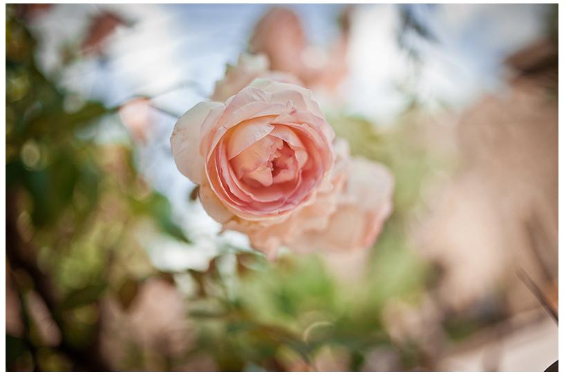 innamorati pazzi fiorista